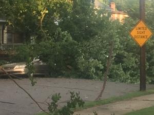 storm debris 4